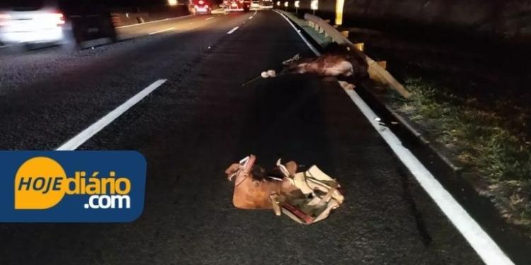 Foto: Divulgação/ Polícia Rodoviária Federal